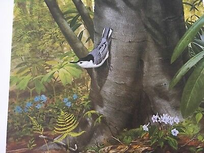 Ray Harm ( White Breasted Nuthatch ) autographed lithograph print Frame House