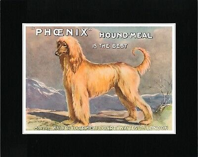 Afghan Hound Dog Food Advert Vintage Style Dog Art Print Ready Matted