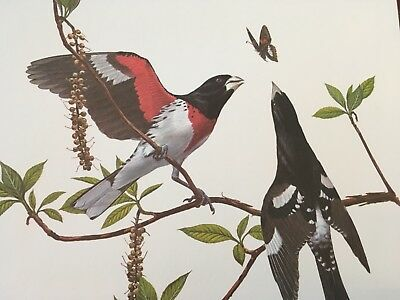 Ray Harm ( Rose Breasted Grosbeak ) autographed lithograph print Frame House