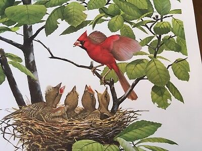 Ray Harm ( Cardinal ) autographed lithograph print Frame House Gallery