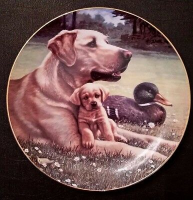 "A Sporting Generation ""Like Father, Like Son"" Labrador Collectors Plate Jim Lamb"