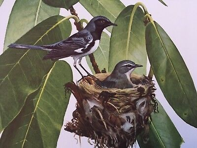 Ray Harm ( Black-Throated Blue Warbler ) autographed lithograph print