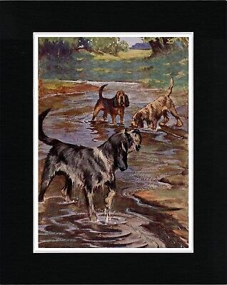 Otterhound Dogs Working A Stream Great Vintage Style Dog Print Ready Matted