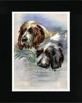 Otterhound Dogs Head Study Great Vintage Style Dog Print Matted Ready To Frame