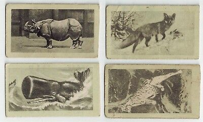 Allens Confectionery - 1920 Animals Collector Cards (4)