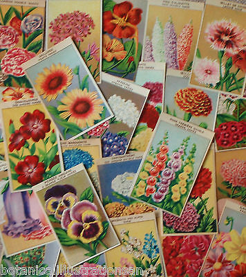 72 DIFFERENT Vintage French Flower Seed Packet Labels Genuine 1920's lithographs