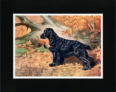 Cocker Spaniel And Bird Great Vintage Style Dog Art Print Ready Matted