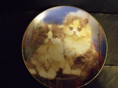 PERSIAN CATS - WHAT CAN THE MATTER BE CAT PLATE - by GUY WITHERS