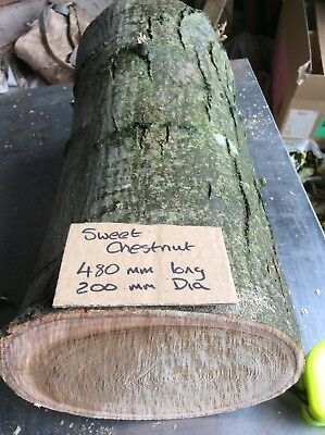 Decorative Log,sweet Chestnut Timber,large Round Log,free Delivery