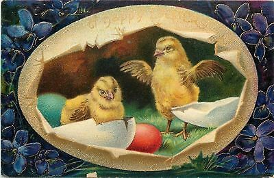 Bright Bold Easter~Chicks in Golden Egg Panorama~Colored Shells~Series 1520a