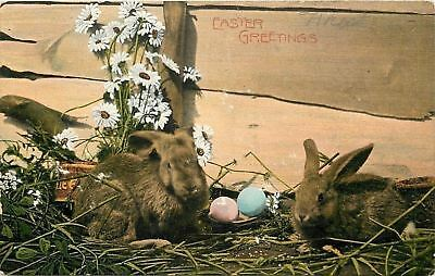 Easter~Soft Brown Bunny Rabbits~Pink Blue Colored Eggs~Fence~Daisies~1909 German