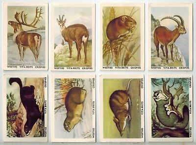 Nabisco - Vitabrits Breakfast Cereal - Animals of the World Collector Cards (8)