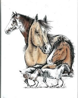 Horses,Horses & More Horses Gorgeous MUSTANG Note Cards NEW - SEALED Package