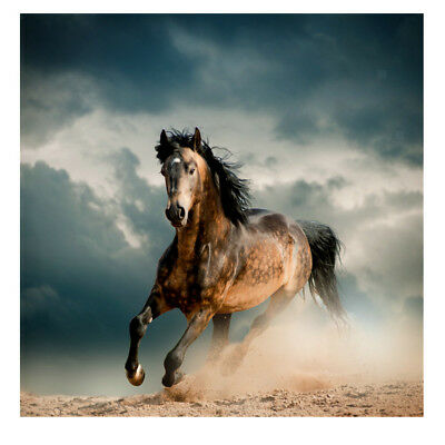 Modern Canvas Print Art Oil Painting Wall Picture Home Decor Unframed Horse