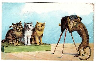 Photography/Camera Interest,Cats/Kittens & Monkey Photographer (Posted 1907)