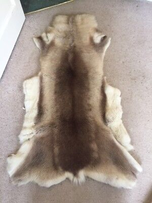GENUINE REINDEER FUR RUG HIDE large, lovely & thick but moults - taxidermy pelt