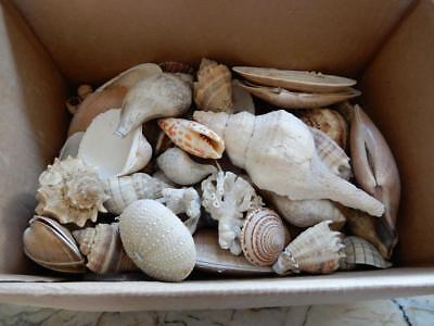 3.4 pounds of Mixed Shells (Great Mix) ***Special*** (SSH20181)