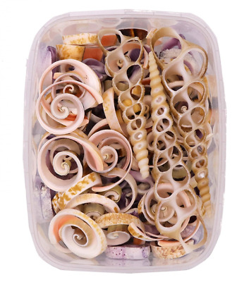 Seashells - Cut Shell Pack 170 Grams - Shells for Crafts Supplies and Decoration