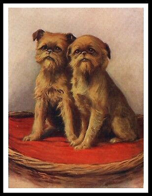 Brussels Griffon Two Dogs On A Red Cushion Lovely Vintage Style Dog Print Poster