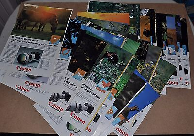 1981-84 CANON F-1 Camera advertisements x36 endangered wildlife 36 different ads