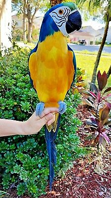 Custom Handcrafted Ultra Lightweight Parrot With Real Feathers/bendable Feet!