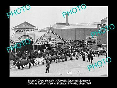 Old Large Historical Photo Of Ballarat Victoria, The Livestock Markets 1905