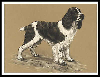 English Springer Spaniel Lovely Vintage Style Dog Art Print Poster