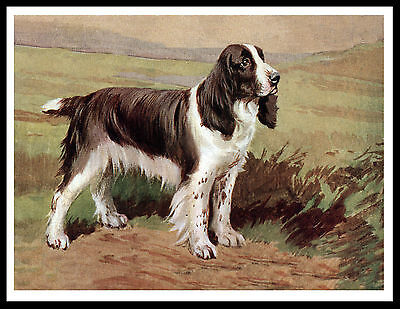 English Springer Spaniel Great Vintage Style Dog Art Print Poster