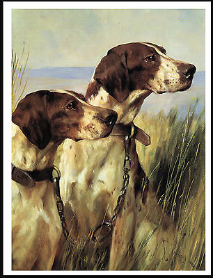 Pointer Two Dogs Head Study Lovely Image Vintage Style Dog Print Poster