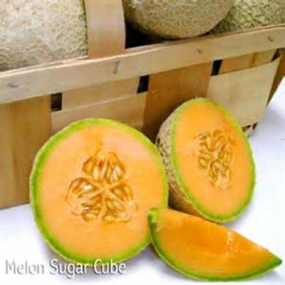 Mini Sugar Cubes Cantaloupe - 20 Seeds- COMBINED S/H-  SEE OUR STORE!
