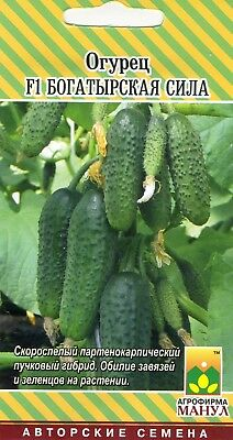 "Cucumber ""F1 Heroic Power"". Russian High Quality."