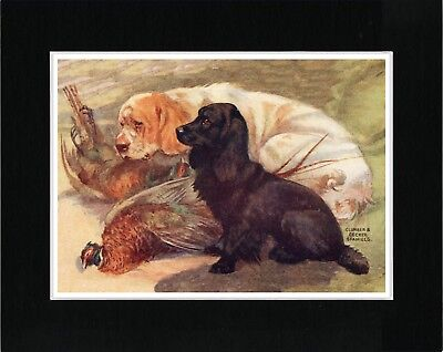 Clumber And Cocker Spaniel Dogs Great Vintage Style Dog Art Print Ready Matted