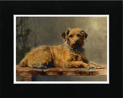 Border Terrier On Seat Lovely Vintage Style Dog Art Print Matted Ready To Frame