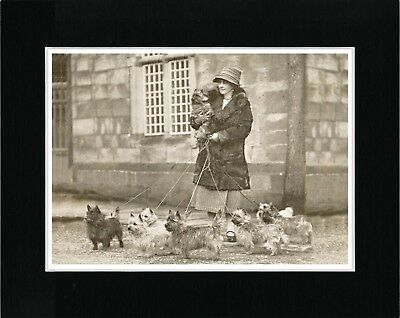 Cairn Terrier Lady And Dogs Vintage Style Dog Art Print Matted Ready To Frame