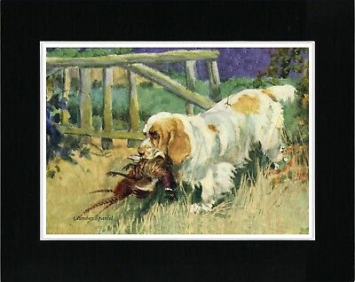 Clumber Spaniel And Pheasant Vintage Style Dog Print Ready Matted