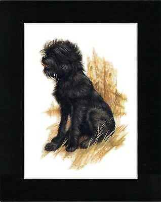 Affenpinscher Lovely Image Vintage Style Dog Print Ready Matted