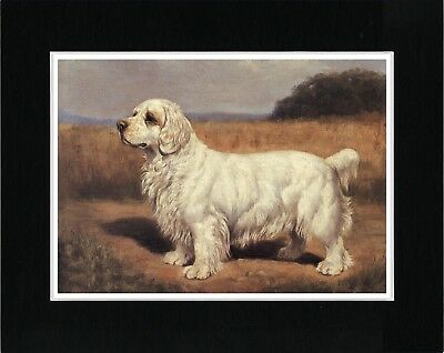 Clumber Spaniel Standing Dog Great Vintage Style Dog Art Print Ready Matted