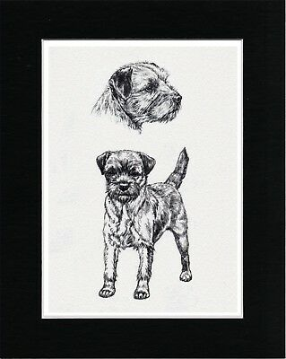 Border Terrier Lovely Vintage Style Dog Art Sketch Print Matted Ready To Frame