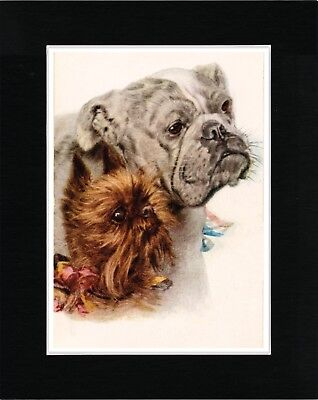 Brussels Griffon And Bulldog Lovely Dog Art Print Matted Ready To Frame