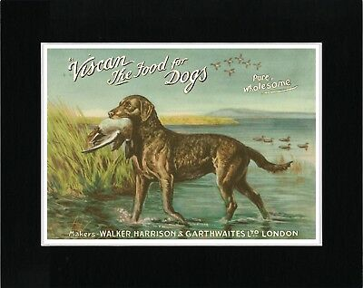 Chesapeake Bay Retriever Great Vintage Style Dog Food Advert Art Print Matted
