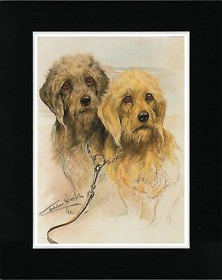 Dandie Dinmont Terrier Dogs Head Study Vintage Style Dog Art Print Ready Matted