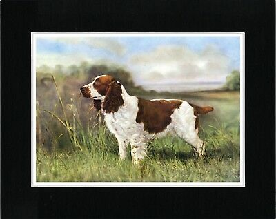 English Springer Spaniel Lovely Vintage Style Dog Art Print Ready Matted