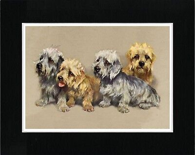 Dandie Dinmont Terrier Dogs Vintage Style Art Print Matted Ready To Frame