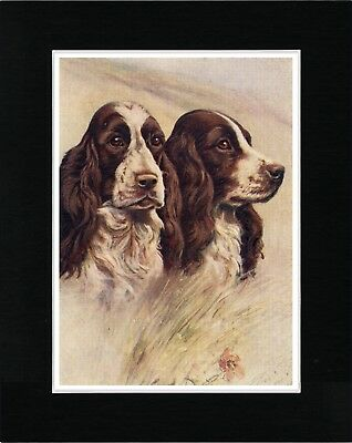 English Springer Spaniel Dogs Head Study Vintage Style Dog Print Ready Matted