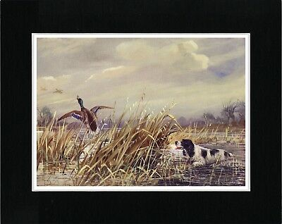 English Springer Spaniel In Marshland Vintage Style Dog Art Print Ready Matted