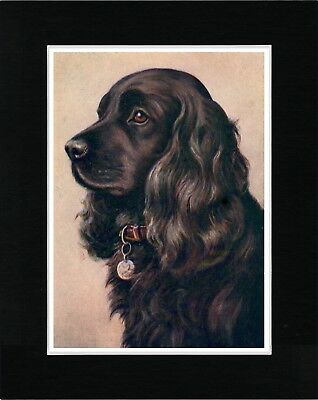 Cocker Spaniel Head Study Lovely Vintage Style Dog Art Print Ready Matted