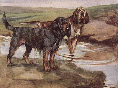Otterhound Charming Dog Greetings Note Card, Two Dogs In Stream