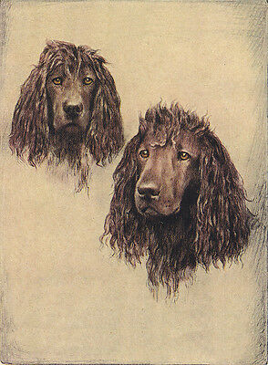 Irish Water Spaniel Charming Dog Greetings Note Card Two Lovely Dogs Head Study