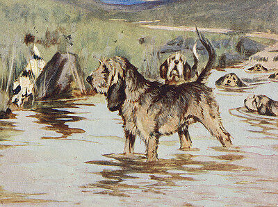 Otterhound Charming Dog Greetings Note Card, Pack Of Dogs Swim In Water