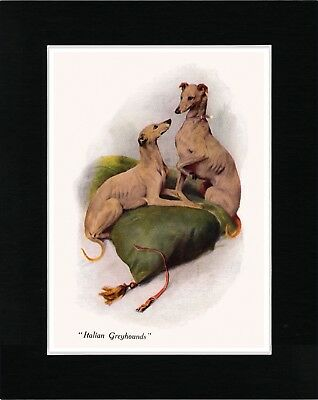 Italian Greyhound Dogs Lovely Image Vintage Style Dog Print Ready Matted